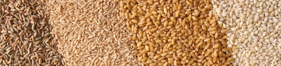 Bild Bio Getreide Aufkauf