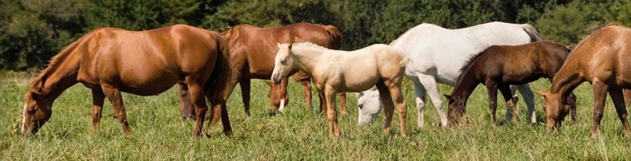 Bild Bio-Futter Pferd